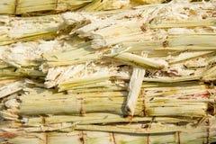 Feche acima do bagaço da pilha da cana-de-açúcar e da abelha Fotos de Stock Royalty Free