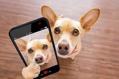 Feche acima do cão curioso olha acima o selfie imagens de stock royalty free