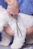 Feche acima do cabelo da pele do cão do corte da mão Foto de Stock Royalty Free