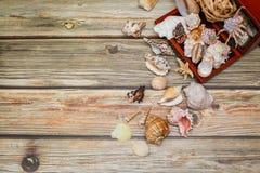 Feche acima do caixão antigo para a joia com coleção de conchas do mar diferentes na tabela de madeira fotografia de stock