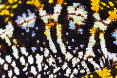 Feche acima do camaleão jeweled Foto de Stock Royalty Free