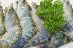 Feche acima do camarão fresco na placa branca Fotos de Stock