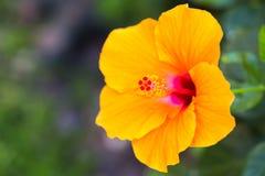 Feche acima do carpelo da flor imagens de stock