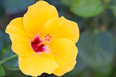 Feche acima do carpelo da flor imagem de stock royalty free