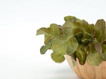 Feche acima do carvalho verde no copo de madeira Imagem de Stock Royalty Free