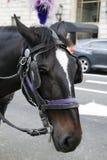 Feche acima do cavalo Imagens de Stock