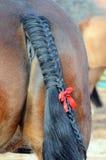 Feche acima do cavalo de /detail/cauda de pônei que ostenta a fita vermelha (o retrocesso) Fotografia de Stock Royalty Free