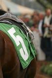 Feche acima do cavalo do puro-sangue Fotografia de Stock