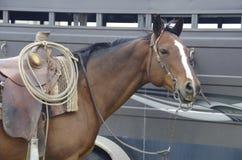 Feche acima do cavalo do puro-sangue da baía com sela ocidental fotos de stock