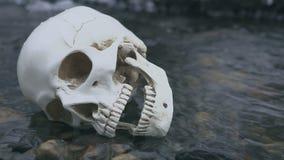 Feche acima do crânio no rio O conceito da morte na água filme