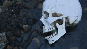 Feche acima do crânio no rio O conceito da morte na água vídeos de arquivo
