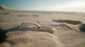 Feche acima do crânio do pássaro entrar silenciosamente do erro que encontra-se na areia na praia da ilha de deserto filme