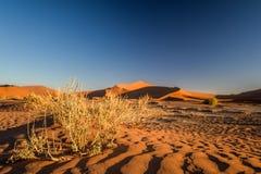 Feche acima do detalhe de arbustos inoperantes da grama em Sossusvlei perto de Sesriem no deserto de Namib em Namíbia, África imagens de stock royalty free