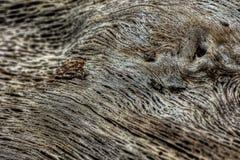 Feche acima do detalhe de madeira lançada à costa Fotografia de Stock