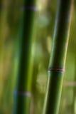 Feche acima do detalhe do tiro de bambu Imagens de Stock Royalty Free