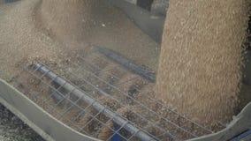 Feche acima do eixo helicoidal da grão que transporta as grões do trigo vídeos de arquivo