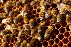Feche acima do favo de mel na colmeia de madeira com as abelhas nela Conceito da apicultura fotografia de stock royalty free
