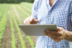 Feche acima do fazendeiro Using Digital Tablet na exploração agrícola orgânica