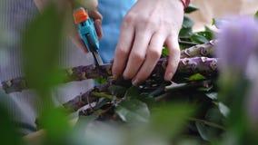Feche acima do florista fêmea que corta o ramo grande com tesoura de podar manual imagens de stock royalty free