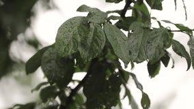 Feche acima do folheto verde no parque quando for chuvoso vídeos de arquivo
