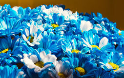 Feche acima do fundo das flores Ramalhete dos crisântemos ` S da mãe e dia das mulheres 8 de março Imagem de Stock