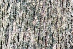 Feche acima do fundo seco da casca de árvore fotos de stock royalty free