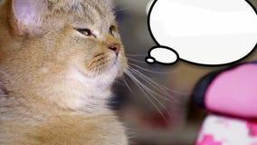 Feche acima do gatinho bonito novo pequeno que senta-se e que pensa com uma caixa de diálogo tirada video estoque