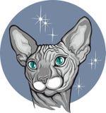 Feche acima do gato do sphynx Etiqueta da loja de animais de estimação fotografia de stock royalty free