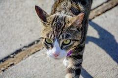 Feche acima do gato imponente exterior fotos de stock