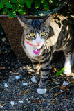 Feche acima do gato imponente exterior foto de stock royalty free