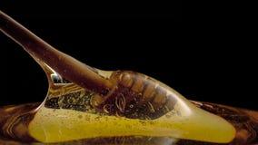 Feche acima do gotejamento do mel de um dipper de madeira no fundo preto imagens de stock