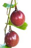 Feche acima do grupo de frutos de paixão frescos no fundo branco Imagem de Stock Royalty Free
