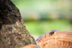 Feche acima do inseto na madeira marrom na floresta, inseto macro no jardim Fotografia de Stock