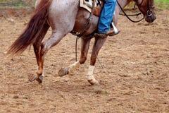 Feche acima do jogo de pernas para o corte do cavalo fotografia de stock