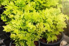 Feche acima do musgo de ponto verde no jardim Fotos de Stock Royalty Free