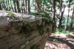 Feche acima do musgo em uma árvore Foto de Stock