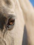 Feche acima do olho de um cavalo Fotografia de Stock Royalty Free
