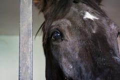 Feche acima do olho preto do cavalo no estábulo imagens de stock royalty free
