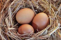 Feche acima do ovo da galinha Imagens de Stock