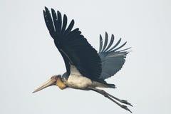 Feche acima do pássaro em voo Imagem de Stock