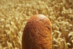 Feche acima do pão antes do campo de milho Imagem de Stock Royalty Free