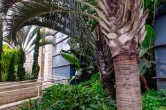 Feche acima do projeto ajardinando exótico com as palmas no complexo de construção moderno da arquitetura Foco seletivo Espaço pa Imagem de Stock Royalty Free