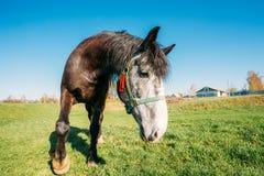 Feche acima do retrato engraçado na lente larga do ângulo do cavalo no céu azul imagem de stock