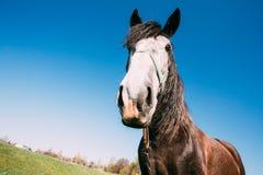 Feche acima do retrato engraçado na lente larga do ângulo do cavalo no fundo do céu azul foto de stock royalty free