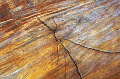 Feche acima do seção transversal do tronco de árvore que mostra anéis de crescimento Madeira Imagem de Stock Royalty Free
