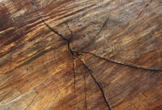 Feche acima do seção transversal do tronco de árvore que mostra anéis de crescimento madeira f Fotos de Stock Royalty Free