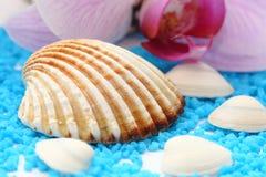Seashell de Brown fotos de stock