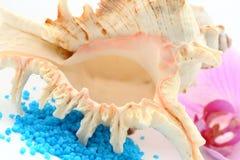Seashell de Brown fotografia de stock