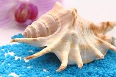 Seashell de Brown fotografia de stock royalty free