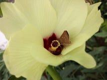 Feche acima do tiro da flor e da borboleta amarelas fotos de stock royalty free